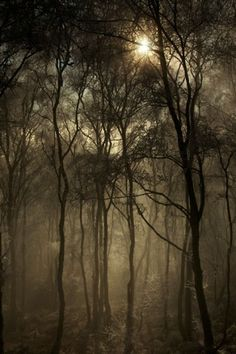 Rawhead woods by Peter Clark, Adult Your View Winner 2011