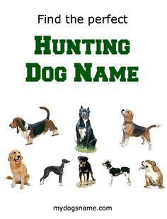Perfect Hunting Dog Names