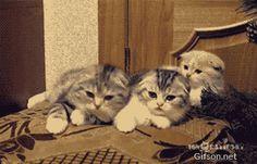 PAWBO~Cat & Dog - Community - Google+