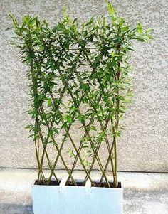 Stačí odřezat vrbové proutí, zapíchnout do květináče a zaplést: Vydržte pár týdnů a vznikne Vám úžasná dekorace!   Prima
