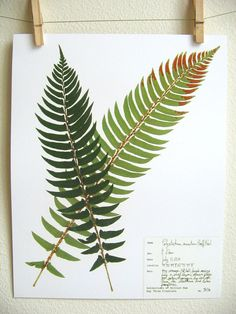 Fern Botanical PRINT Original Herbarium by DayThreeCreations Mother Tattoos For Children, Tattoos For Kids, Foot Tattoos, Arm Tattoo, Sword Fern, Fern Frond, Plant Drawing, Plant Art, Beautiful Drawings
