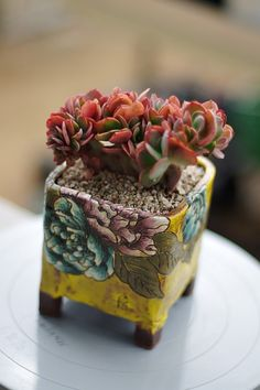 Succulents In Containers, Cacti And Succulents, Planting Succulents, Face Planters, Diy Planters, Succulent Arrangements, Succulent Pots, Cactus E Suculentas, Desert Flowers