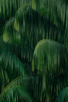 Rainforest & Jungle Photography – Design. / Visual.