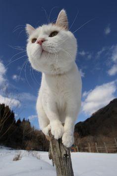 source:かご猫