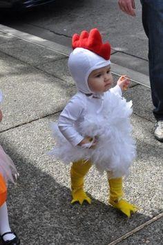 Adorable little chicken
