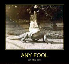 any fool.