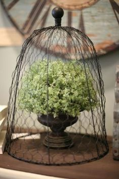 wire cloche - Google Search by sillyme2