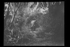 Ein Elefant im Dschungel