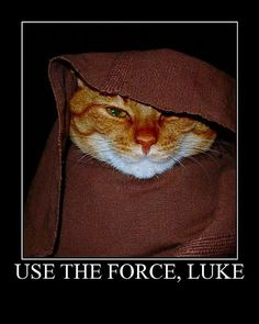 May the Feline be with you Cute Animals Images, Funny Animals, Animal Pictures, Animal Facts, Animal Memes, Animal Funnies, Funny Cat Photos, Funny Cats, Best Cat Memes
