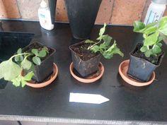 Dag 333/365 Plantenkracht