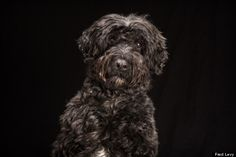 La belleza de los perros negros