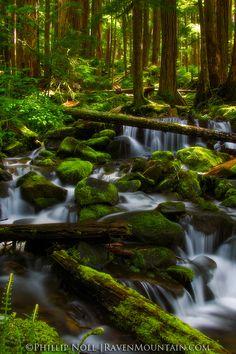 Rain Forest, Sol Duc Falls Trail, Olympic National Park, Washington