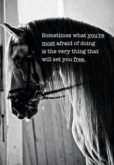 The most important role of equestrian clothing is for security Although horses can be trained they can be unforeseeable when provoked. Riders are susceptible while riding and handling horses, espec… Inspirational Horse Quotes, Motivational Quotes, Great Quotes, Me Quotes, Scary Quotes, Daily Quotes, Psych Quotes, Foto Cowgirl, Horse Riding Quotes