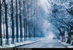Blurred trees in winter with selective focus on snowflakes