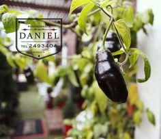 Restaurante Daniel - Los esperamos... Calle 73 # 9-70, Bogota | Reservas: 2493404 | www.daniel.com.co