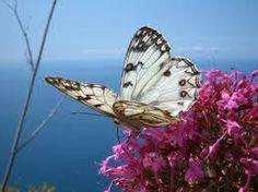 farfalle libere.