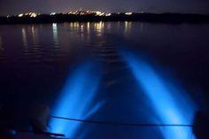 Baía Luminescente- Porto Rico