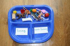 Classer des figurines selon des caractéristiques. Ici, êtres vivants ou objets ?