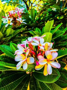 Frangipani in Hawaii by James M. Grentz. This is a plumaria flower found all through Hawaii