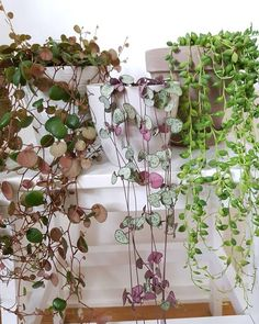 winter hanging plants 1301690296 - Home Decoration Styling Planting Succulents, Garden Plants, Planting Flowers, Vegetable Garden, Hanging Plants, Indoor Plants, Cactus Plant Pots, Decoration Plante, Blooming Plants