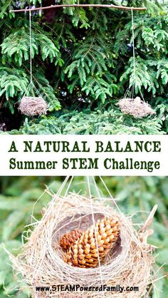 It's time for an outdoor STEM challenge! Take your learning outdoors with this fun, natural fulcrum balance for some wonderful natural exploration and STEM learning. Outdoor Learning Spaces, Outdoor Education, Outdoor Activities For Kids, Physical Education, Health Education, Education Logo, Play Spaces, Science Education, Forest School Activities