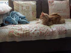 de ukkies liggen onder de blauwe deken