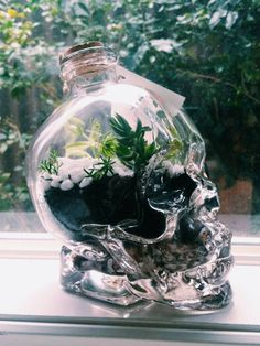 Skull Terrarium Living & Breathing by formandflux on Etsy Crystal Terrarium Diy, Succulent Terrarium Diy, Bottle Terrarium, Bottle Garden, Crystal Garden, Terrariums Diy, Closed Terrarium Plants, Garden Terrarium, Glass Crystal