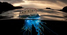 A Parallel Universe: My Half Underwater Images Show What Hides Beneath The Waves | Bored Panda