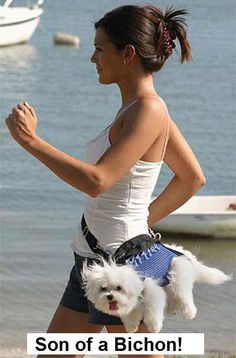 I will never understand why people carry their dog like this...