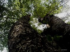 ...arms in the air ...! #tree #wood #green