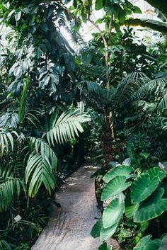 Jungle inspiration garden...would be perfect for Vacation home.