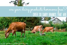 Are Your Dairy Products Hormone Free? (30  Dairy Brands That Are) | Mommy Goes Green