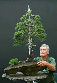 """A tree in a pot is a tree in a pot; it becomes a bonsai when it speaks to your soul"". Walter Pall, born in 1944 in Austria, is one of the most popular bonsai artists who has performed on most international stages. Ikebana, Bonsai Plants, Bonsai Garden, Bonsai Trees, Espalier, Dwarf Trees, Juniper Bonsai, Miniature Trees, Growing Tree"