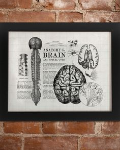 A collage of vintage etchings brain, skull, nerves, spinal column, with passages of an old text book in the background.