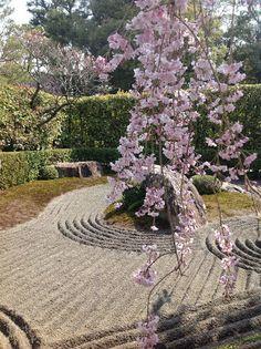 Shidare with Japanese Garden Karesansui