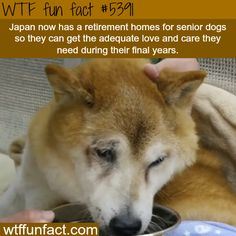 Japan now has retirement homes for dogs - WOW! Jus WOW! ...WTF NOT-a-fun fact!