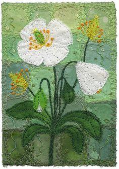 White Poppies by Kirsten Chursinoff, via Flickr