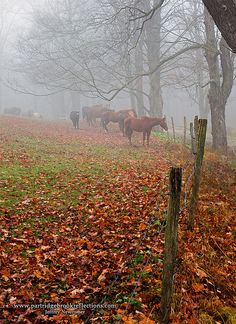 Country Living ~ horses, autumn...