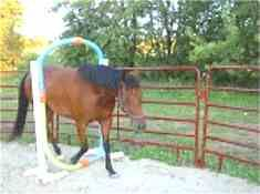 Horse Course; Easy PVC Obstacles P.1 a couple of good ideas