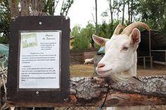 Sortirambnens us proposa una sortida a la natura... I amb animals! La ferme de découverte Saint André a França #sortirambnens