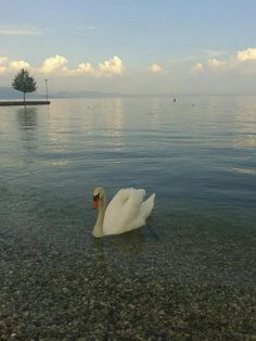 Che magia! [foto Giuliana Vignozzi] #LagoDiGarda #VisitLagoDiGarda #NaturaDelGarda #NaturaLagoDiGarda