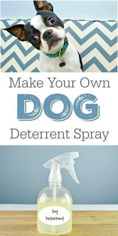 This DIY Dog Deterrent Spray can help stop indoor accidents and keep your dogs from urinating in your home. via @Mom4Real
