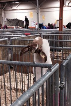 Hey There, I'm A Goat