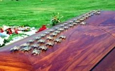 Trident covered casket of a fallen Navy SEAL
