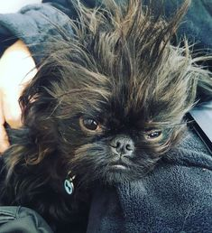 Charlie💙 this face. Cute Puppies, Cute Dogs, Dogs And Puppies, Dog Pictures, Animal Pictures, Griffin Dog, Griffon Bruxellois, Best Dogs For Families, Brussels Griffon