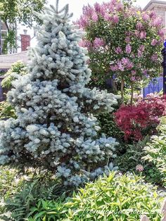 This list of the best backyard trees will give you lots of ideas for trees that will provide shade and privacy even if you have a small yard. #fromhousetohome #gardeningtips #gardenideas #tree #gardening