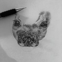 Wip graphite drawing Bambi deer   • mariellevanleeuwen@live.nl • AR•T•INT • www.facebook.com/artintx • instagram @artint