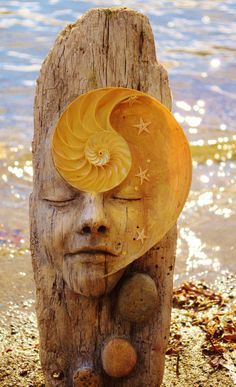 The Dreamer Driftwood and Nautilus Shell Spirit by ShapingSpirit