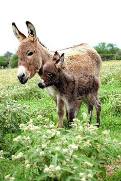 A mother donkey with its foal