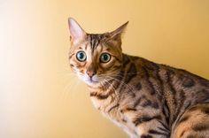 Il y'a un stéréotype que les chats sont froids et distants. Un utilisateur d'Instagrama photographiédes chats et pourmontrer qu'ils sont capables d'une multituded'émotionsallant du sérieux pour stupide et tout le reste.Si vous aimez ce post, n'oubliez pas de partageravec vos amis sur Facebook ! Revanchard Confus Bouillonnant Plein d'assurance Cool Condescendant Bouré Attentif Catatonique Déconcerté...